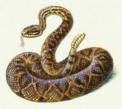 Самые ядовитые змеи Top-10