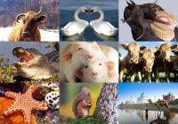 Интересны факты о животных и не только