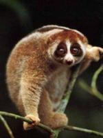 8 самых интересных животных московского зоопарка