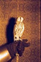 Ловчие птицы не терпят отдыха и любят охотиться